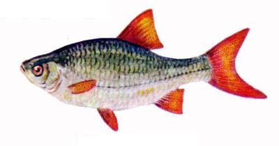 какая рыба клюет в жару