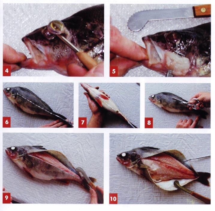 Сделать чучело рыбы своими руками 71